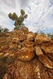 Singolo albero su Rocky Outcrop Immagini Stock