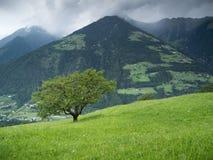 Singolo albero sul pascolo alpino Fotografia Stock Libera da Diritti