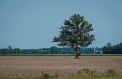 Singolo albero in un campo dell'azienda agricola fotografia stock