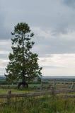 Singolo albero in un paesaggio Fotografia Stock