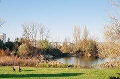Singolo banco vuoto in un parco con il lago Fotografia Stock