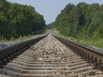 Singolo binario ferroviario nella foresta Fotografia Stock
