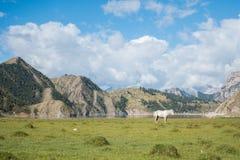 Singolo cavallo bianco sul prato immagine stock