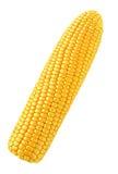 Singolo cereale Immagini Stock