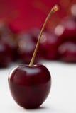 Singolo ciliegio dolce Immagini Stock Libere da Diritti
