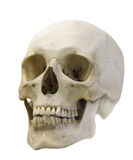 Singolo cranio isolato su bianco Fotografie Stock