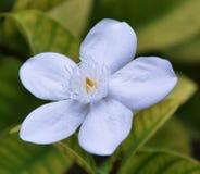 Singolo fiore bianco fotografie stock libere da diritti