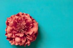 Singolo fiore del crisantemo su fondo verde blu immagini stock