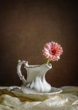 Singolo fiore del gerbera Fotografie Stock Libere da Diritti