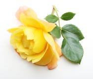 Singolo fiore della rosa di giallo con la foglia Fotografia Stock Libera da Diritti