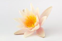 Singolo fiore di loto isolato Immagini Stock Libere da Diritti