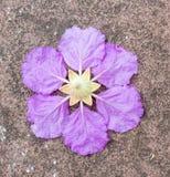Singolo fiore viola sul fondo del cemento Immagini Stock Libere da Diritti