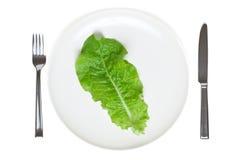 Singolo foglio della lattuga su una zolla Fotografia Stock Libera da Diritti