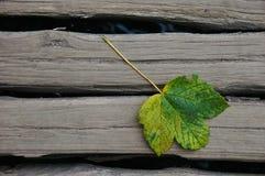 Singolo foglio di autunno Fotografia Stock Libera da Diritti