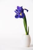 Singolo giglio dell'iride in vaso bianco su priorità bassa bianca Fotografia Stock Libera da Diritti