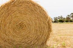 Singolo Hay Bale in un campo in Pafo, isola del Cipro Immagine Stock