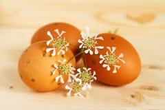 Singolo ini dell'uovo di Pasqua l'erba Immagini Stock