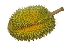 Singolo intero durian Immagini Stock