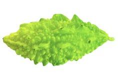Singolo melone amaro verde fotografia stock libera da diritti