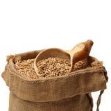 Singolo mucchio della parte anteriore del seme del riso non macinato del grano della risaia Immagine Stock