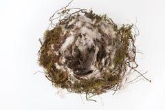 Singolo nido degli uccelli Fotografia Stock Libera da Diritti