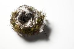 Singolo nido degli uccelli Immagini Stock