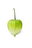 Singolo physalis verde Fotografia Stock