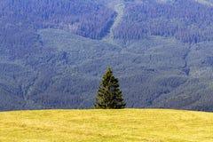 Singolo pino in montagne sull'orizzonte, paesaggio alpino Immagine Stock Libera da Diritti
