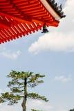Singolo pino sotto il tetto del tempio di Kiyomizu-dera a Kyoto, Giappone immagini stock libere da diritti