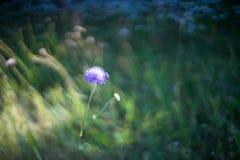 Singolo primo piano del fiore con la farfalla Fotografia Stock Libera da Diritti
