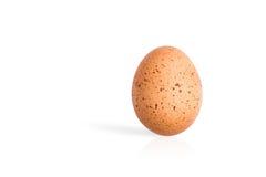 Singolo uovo isolato su fondo bianco Fotografia Stock