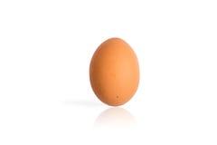 Singolo uovo isolato su fondo bianco Immagine Stock Libera da Diritti