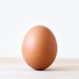 Singolo uovo marrone del pollo immagine stock