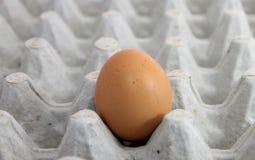 Singolo uovo su un vassoio Fotografie Stock Libere da Diritti