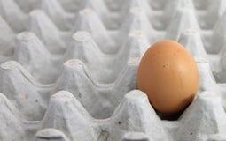 Singolo uovo su un vassoio Immagini Stock