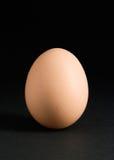 Singolo uovo sul nero immagini stock libere da diritti