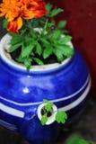Singolo vaso di fiore della teiera Immagine Stock
