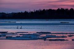 Singschwan oder Cygnus Cygnusschwimmen auf See im Winter w?hrend des magischen bunten Sonnenuntergangs, Hokkaido, Japan, M?rchen, lizenzfreie stockfotografie