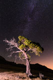 Singular tree under the milky way Stock Image