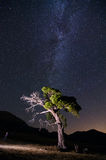 Singular tree under the milky way Stock Photos