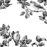 Singvogel auf Niederlassungs-Monochrom-Rahmen Lizenzfreie Stockbilder
