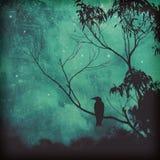 Singvogelschattenbild gegen schwermütigen Abendhimmel stockfotos