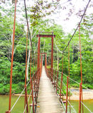 Sinharaja桥梁 图库摄影