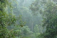 Sinharaja Forest Reserve Stockbild