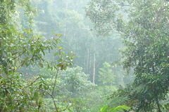 Sinharaja Forest Reserve Stock Image