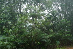 Sinharaja Forest Reserve stock images