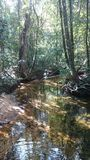 Sinharaja lasowa mała rzeka iść przez drzewnej pokrywy Zdjęcie Royalty Free