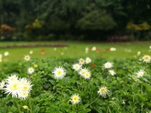 Sinies floresce - o jardim brotanical kandy Sri Lanka do peradeniya imagem de stock