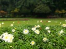 Sinies flowers - peradeniya brotanical garden kandy sri lanka stock image