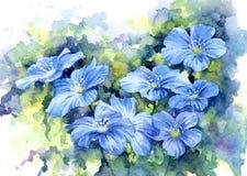 Sinii blommor, vattenfärg Fotografering för Bildbyråer